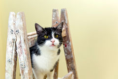 Cat on a wooden ladder Royalty Free Stock Images