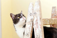 Cat on a wooden ladder Stock Photography