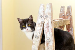 Cat on a wooden ladder Stock Images
