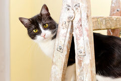 Cat on a wooden ladder Stock Photos