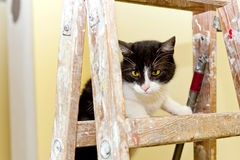 Cat on a wooden ladder Stock Photo