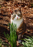 Cat in the woods Royalty Free Stock Images