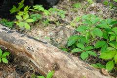 Cat in the woods Stock Photography