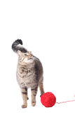 Cat with woolen ball Stock Image