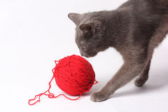 Cat with woolen ball Stock Photos