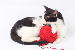 Cat with woolen ball Stock Photo