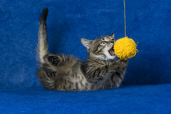 Cat with woolen ball. Kitty with yellow yarn ball, little grey tabby cat playing with skein of tangled sewing threads on blue background Royalty Free Stock Images