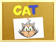 Cat word on a corkboard Royalty Free Stock Images