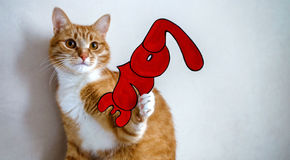 The cat with the word `Love`. For Valentine Day Royalty Free Stock Photography