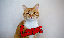 The cat with the word `Love` Stock Images