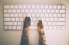 Cat Working With Computer Keyboard et souris Images stock