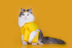 Cat works as a courier on a yellow background Royalty Free Stock Images