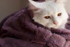 Cat wrapped in blanket Royalty Free Stock Images