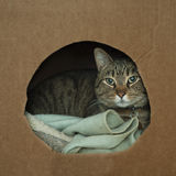 Cat wrapped up in cozy box royalty free stock images