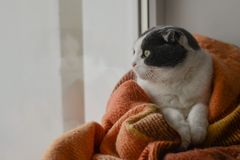 Cat wrapped up warm checkered plaid sitting on a window sill Stock Photography