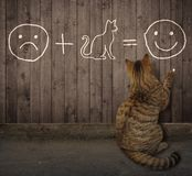 Cat writes an equation on the fence royalty free stock photo