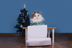 Cat writes a letter to Santa Claus Royalty Free Stock Image