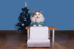 Cat writes a letter to Santa Claus Royalty Free Stock Images
