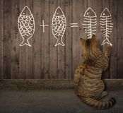 Cat writes a math equation. The cat writes a mathematical equation on the wooden fence stock photo