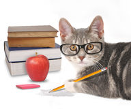 Cat Writing astuta con i libri su bianco