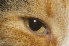 Cat's eye closeup Stock Image