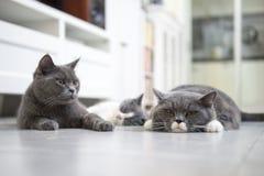 The cat's family Royalty Free Stock Photos