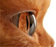 Cat&x27;s Eye Close Up Stock Image