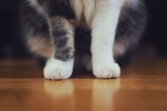 Cat's Legs and Feet Royalty Free Stock Images