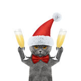 Cat on a xmas holiday with a glass of champagne Royalty Free Stock Photography