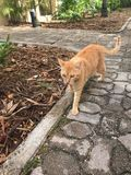A cat in the yard. Walking along the promenade Royalty Free Stock Image