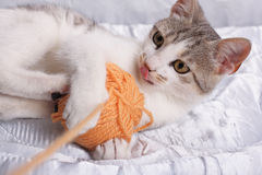 Cat and Yarn. Cat is happily playing with a ball of yarn Royalty Free Stock Photos