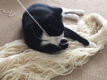 Cat with Yarn Royalty Free Stock Images