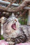 Cat yawning garden Stock Images