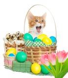 Cat yelling Royalty Free Stock Image