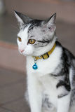 Cat. Yellow cat eyes Royalty Free Stock Image