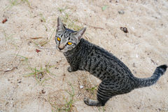 Cat with yellow eyes on the beach. Tabby cat with yellow eyes on the beach Stock Photos