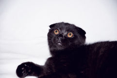 Cat with yellow eyes Stock Photo
