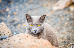 Cat with yellow eyes. I took this picture of a cat with yellow eyes at Lanzarote Stock Photography