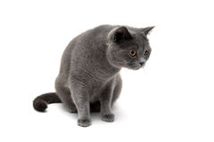 Cat with yellow eyes isolated on a white background Royalty Free Stock Image
