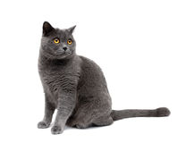 Cat with yellow eyes isolated on a white background Stock Photo