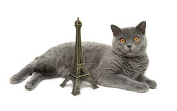Cat with yellow eyes lying about the figures of the Eiffel Tower Stock Images