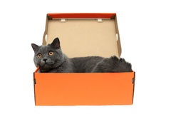 Cat with yellow eyes lying in an open cardboard box on a white b Stock Image