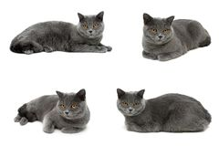 Cat with yellow eyes lying on a white background Royalty Free Stock Photography