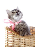 Cat with yellow eyes and a pink bow in a wattled basket. Royalty Free Stock Photography