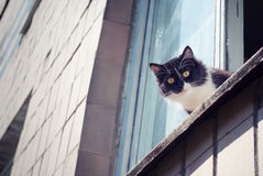 Cat with yellow eyes is seating on the window. And looks terrified Stock Photography