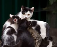 A cat with yellow eyes sits with kittens on a blurred dark background stock photo