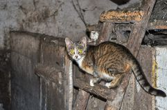 Cat with yellow eyes, standing on a ladder, running away, looking at the camera royalty free stock images