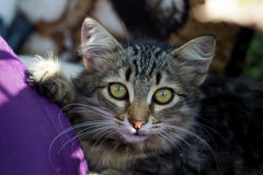 Cat with yellow eyes. On the street with the small depth of sharpness Stock Image