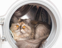 Cat with yellow eyes in the washing machine. Fluffy cat with yellow eyes . Cat with yellow eyes in the washing machine Royalty Free Stock Photo