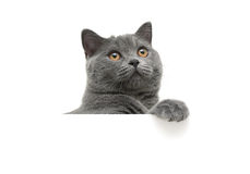 Cat with yellow eyes on a white background sits behind a white b Stock Photos